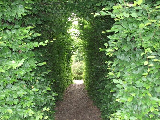 tunel_grabowy.jpg